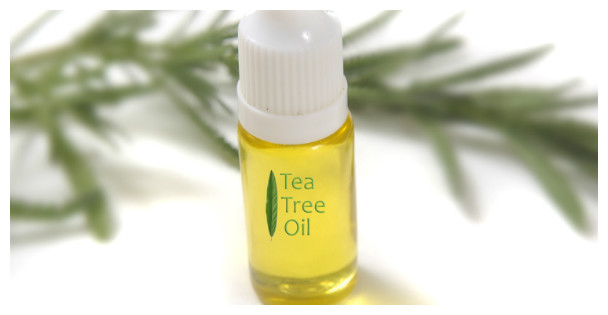 свойства эфирного масла чайного дерева