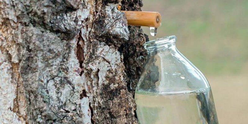 Чем полезен березовый сок для организма?