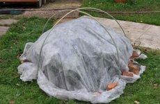 Как подготовить гортензию к зиме?