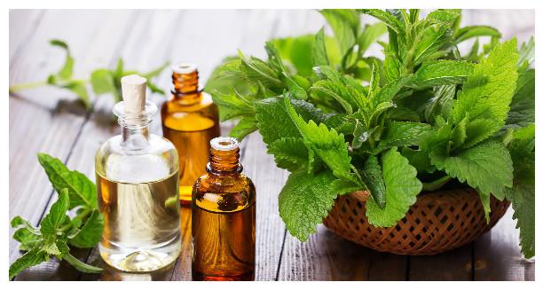 Эфирное масло мяты: свойства и применение