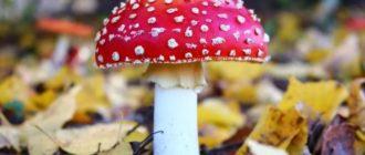 Вред грибов для организма человека