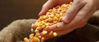Применение кукурузных рыльц для похудения