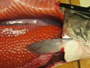 Рецепт засолки икры и филе рыбы