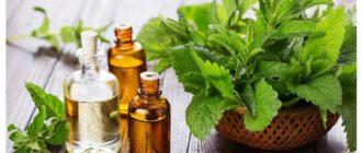 эфирное масло мяты свойства и применение