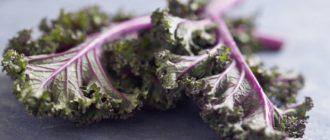 польза листовой капусты